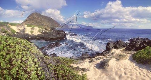 Native Plants and Pohaku of Kaena Point – Part 3