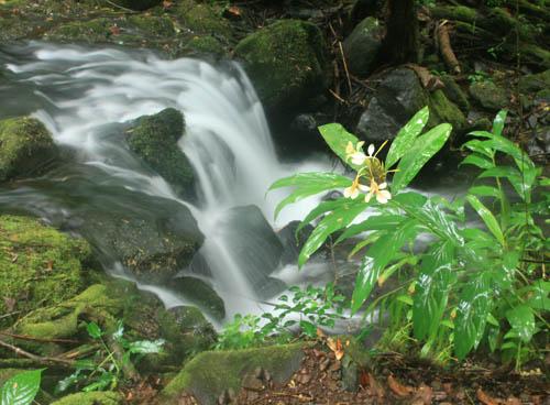 waikanestream-waterfall-ginger.jpg