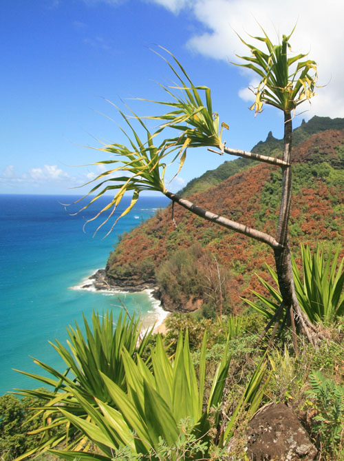 Part 2 – Backpacking the Kalalau Trail – Hanakapi'ai to Hanakoa