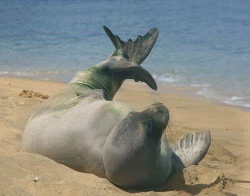 kee-beach-seal-stretching.jpg