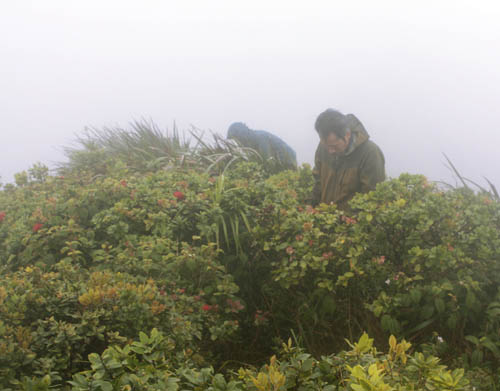 misty-ridge-with-ohia.jpg