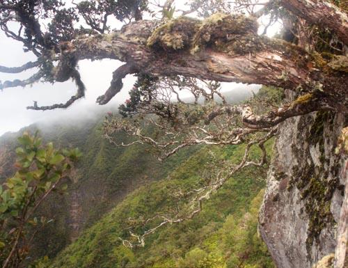 kaala-boulder-climb.jpg