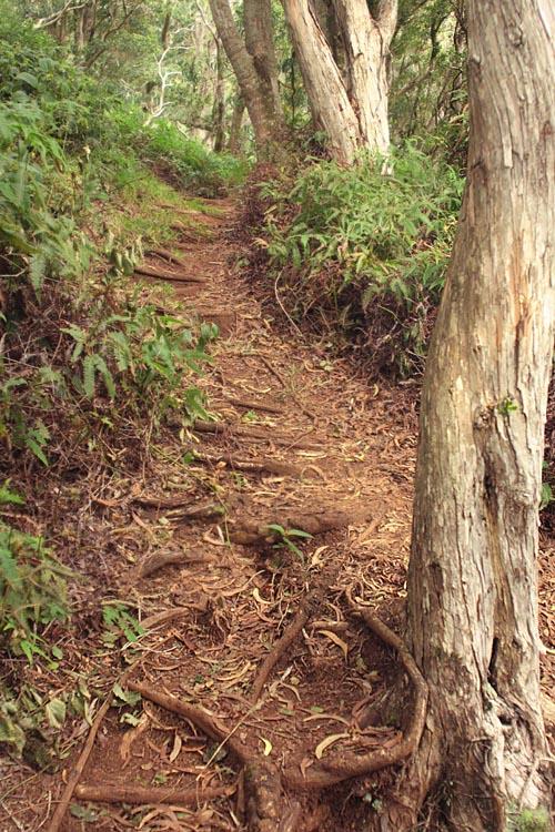 kaala-uphill-uluhe.jpg