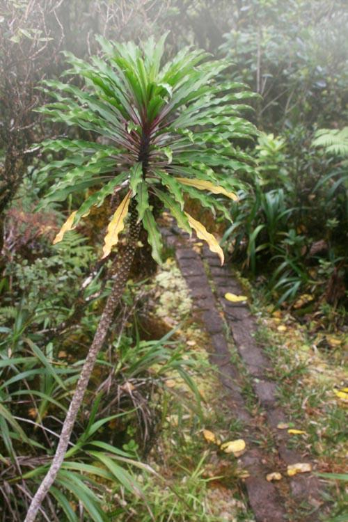 kaalasummit-kolii-plant-mist.jpg
