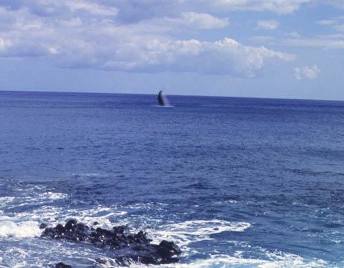 kaenapt-whale-fin.jpg