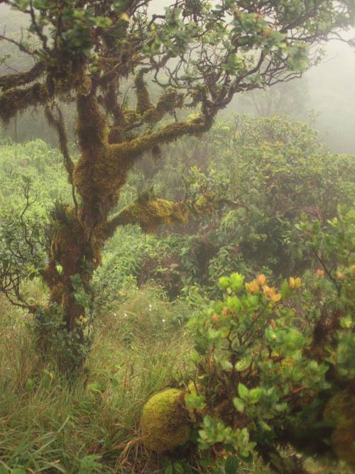kahuauli-cloudforest-1.jpg