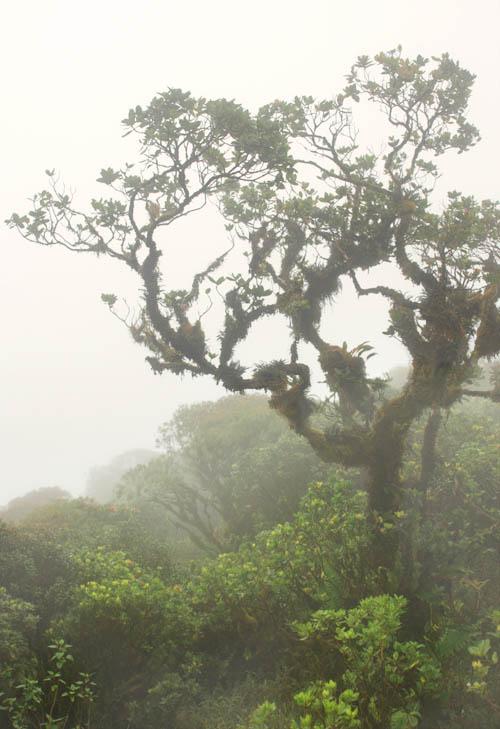 kahuauli-cloudforest-3.jpg