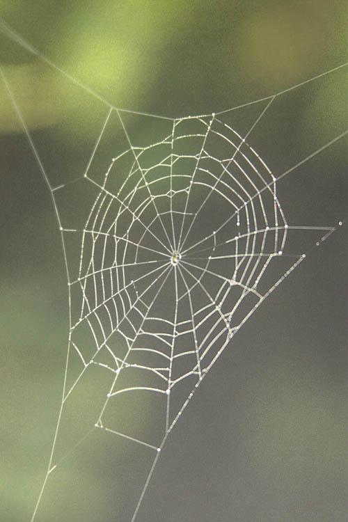 kahuauli-spider-web.jpg
