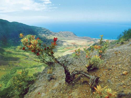 mokuleia-makua-valley-lookout.jpg