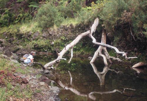 wailuku-dead-tree-reflected-in-pool-cropped.jpg