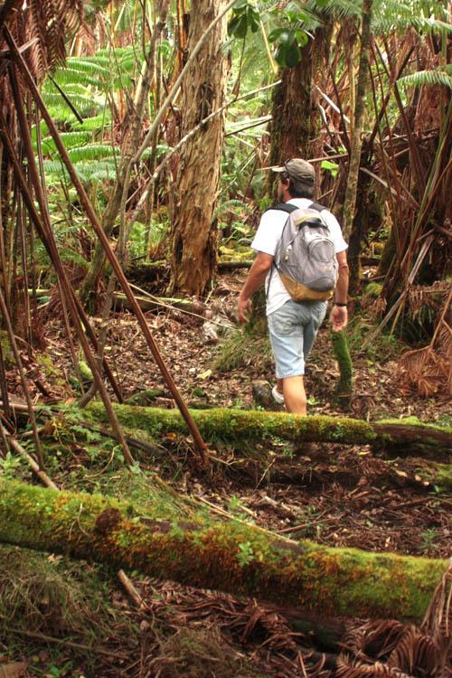 wailuku-forest-pete.jpg