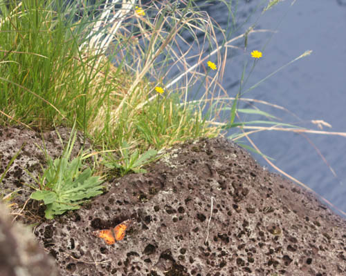 wailuku-kamehameha-butterfly-pool.jpg
