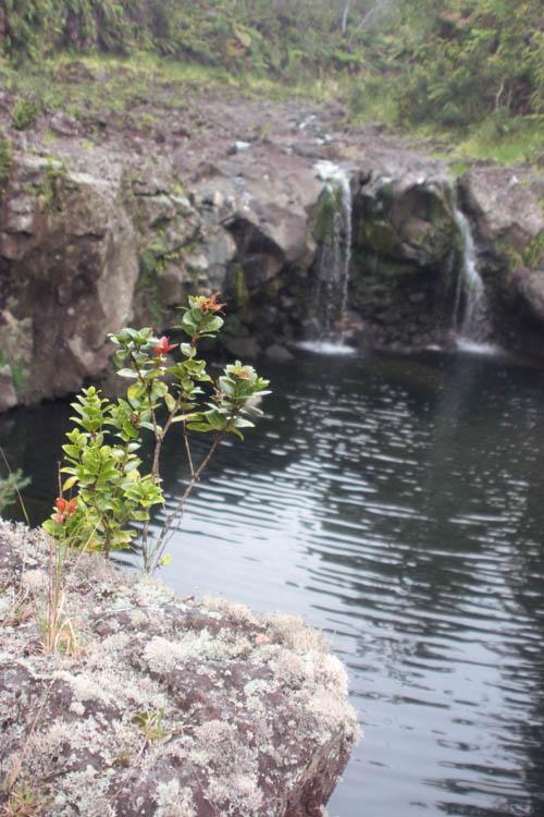 wailuku-ohia-waterfall-pool-upright.jpg
