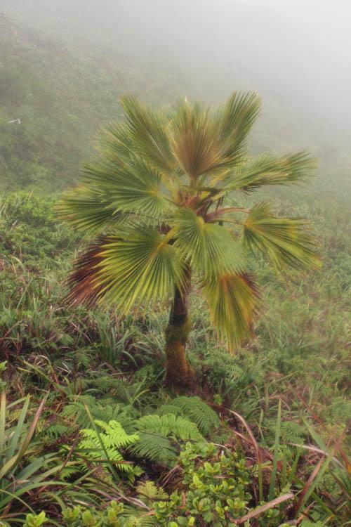 manana-loulu-in-the-mist.jpg