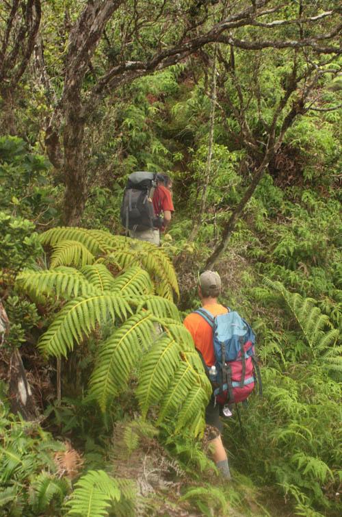 manana-trail-august-nikolaj.jpg