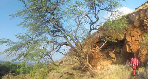 Kamaileunu-Kukaauau-Cave-KiaweTree