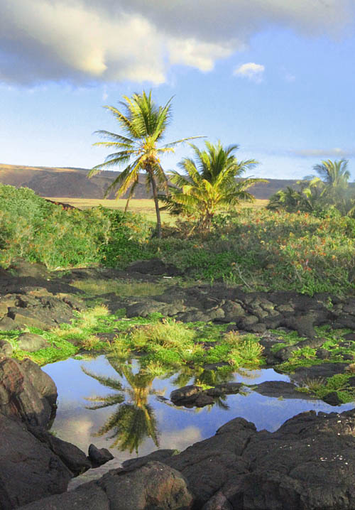 Keauhou-Lava-Anchialine-Pond-Niu-Reflection-Sml