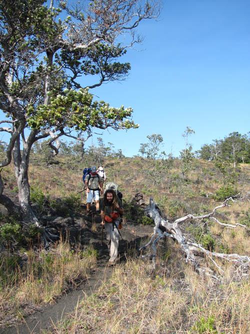 Keauhou-Trail-Ohia-Grass-Backpackers