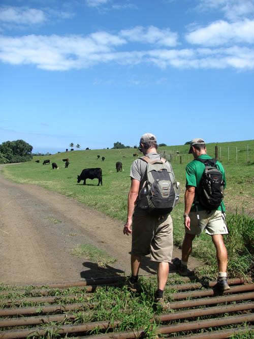 MooKapuOHaloa-Kaaawa-Ranch-Cattle-Grating-Sml
