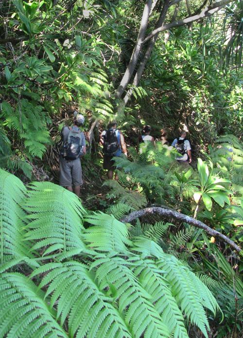 MooKapuOHaloa-Saddle-Native-Trail-Sml