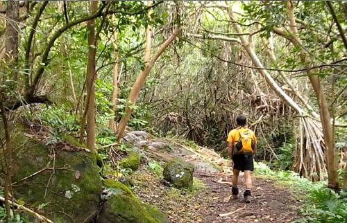 Hauʻula Uka Loop