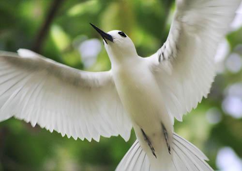 Rainforest Birds Flying The birds are named  white