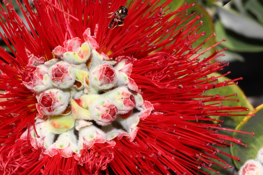 01-Red Lehua - w Yellow Face Bee - 01-2500 (2)