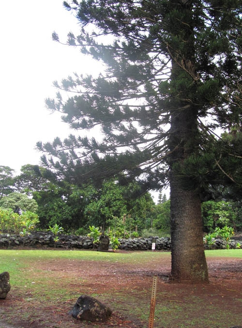 Hawaiian Forestry and Medicine on Aiea Ridge