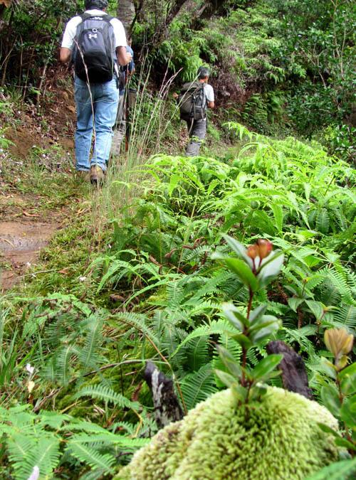 Native Snails on the Poamoho Trail