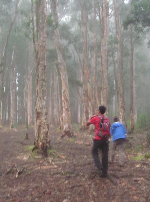 Schofield-Waikane Hike