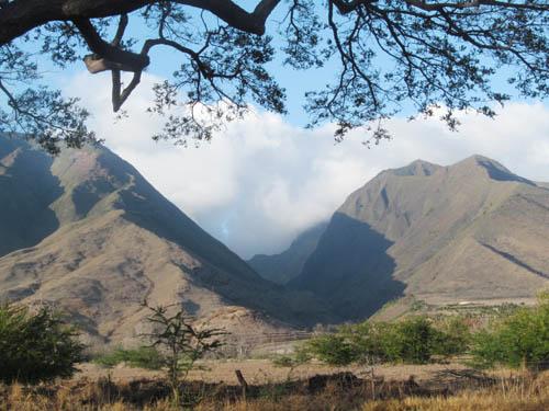 Native Damselflies and Tree Snails in Olowalu Valley
