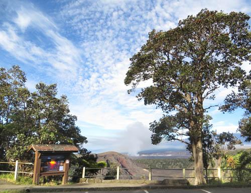 ʻApapane at Kilauea Iki